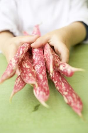 borlotti beans: Childs hands holding several borlotti beans