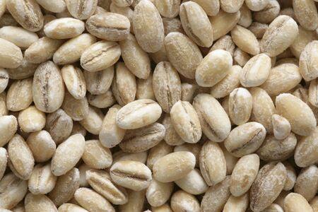 aaa: Grains of barley (full-frame) LANG_EVOIMAGES