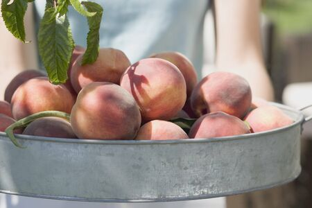 summery: Woman holding fresh peaches in metal container