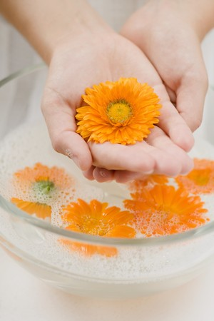spoiling: Hands holding marigold over bowl of soapy water