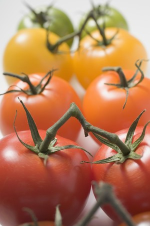 cherry tomatoes: Cherry tomatoes (various colours)