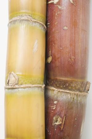 saccharum: Sugar cane (detail) LANG_EVOIMAGES
