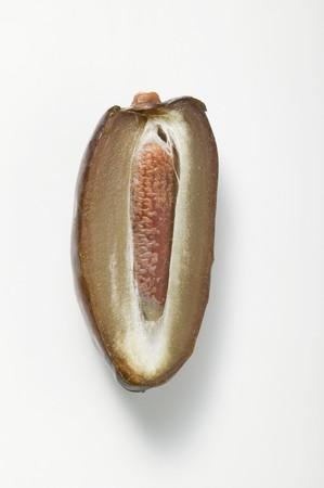 dactylifera: Half a date