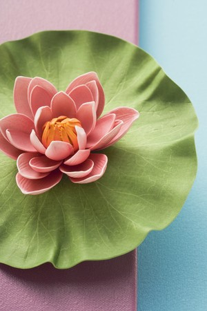 nymphaea odorata: Water lily from above