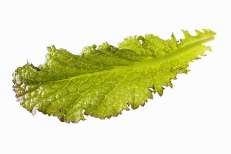 mustard leaf: A red mustard leaf