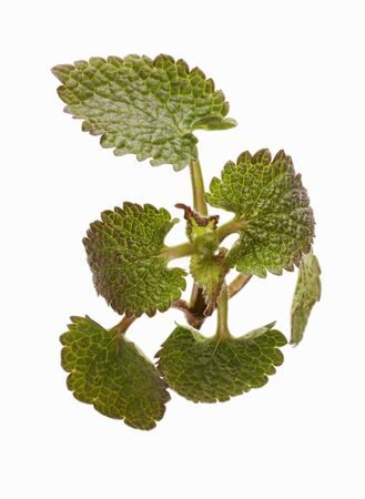 complementary therapy: Dead-nettle