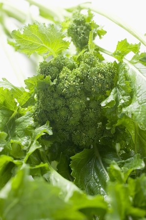 comida: Rabe brócolis frescos (detalhe)