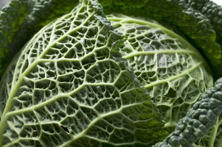 savoy cabbage: Savoy cabbage (close-up)