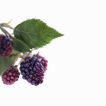 brambleberries: Unripe blackberries with leaves