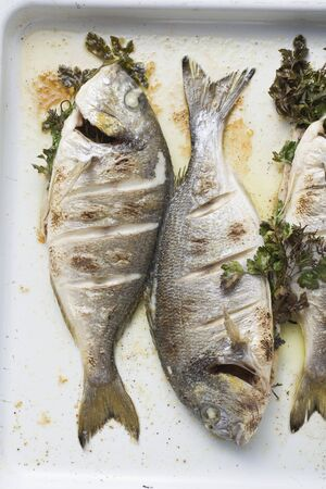 sea bream: Roasted sea bream with parsley (overhead view)