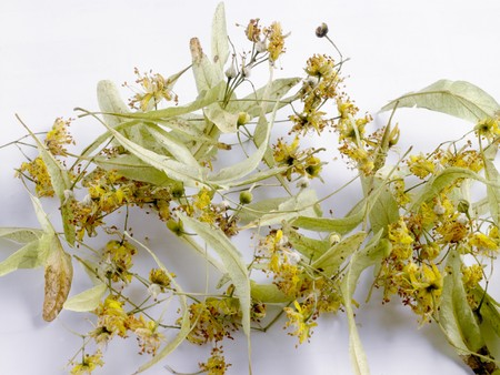 tiliae: Lime flowers and bracts
