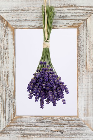 full suspended: Lavender hanging up to dry