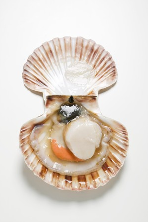 coquille: A scallop, opened wide