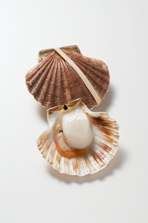coquille: Fresh scallops LANG_EVOIMAGES