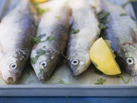 salmo trutta: Fresh trout with lemon and parsley, ready for grilling