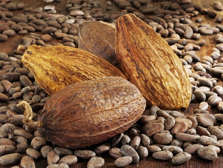 cocoa pod: Cocoa fruits and cocoa beans LANG_EVOIMAGES