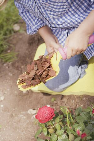 bark mulch: Child spreading bark mulch around rose bush with spade