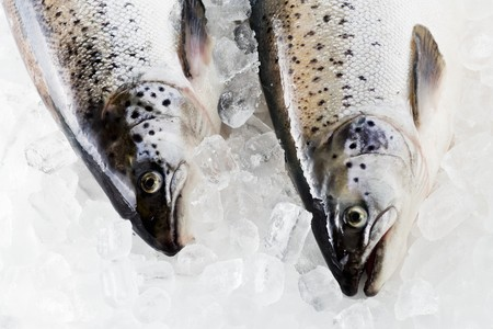 tasmanian: Tasmanian salmon on ice