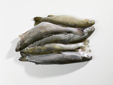 salmo trutta: Several frozen trout LANG_EVOIMAGES