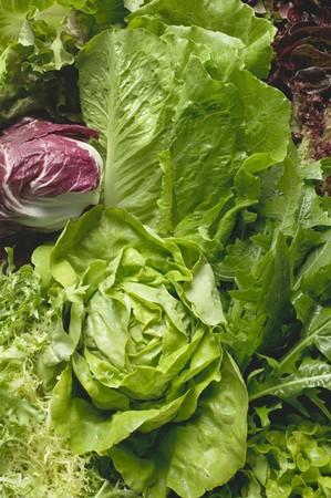 lettuces: Various lettuces and salad vegetables (full-frame)