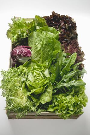 lettuces: Assorted lettuces and salad leaves in crate