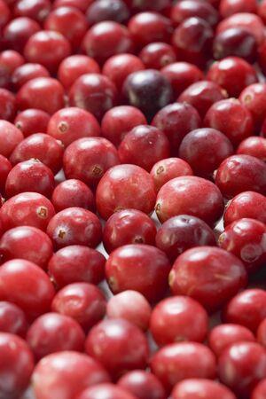 vaccinium macrocarpon: Cranberries (full-frame) LANG_EVOIMAGES