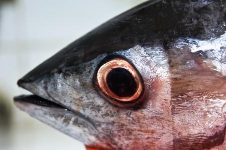 tunafish: The head of a tuna fish