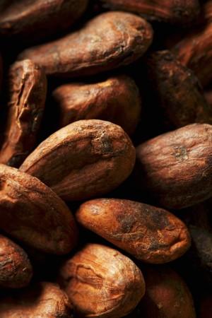 cacao beans: Los granos de cacao (primer plano)