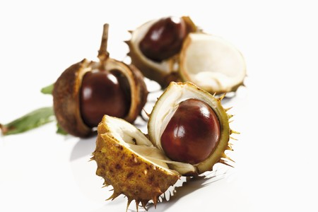horse chestnuts: Horse chestnuts, with opened shells