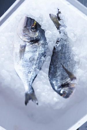 sea bream: Two fresh sea bream on ice