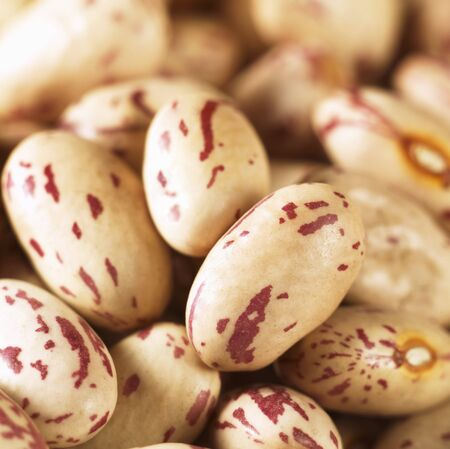 borlotti beans: Borlotti beans
