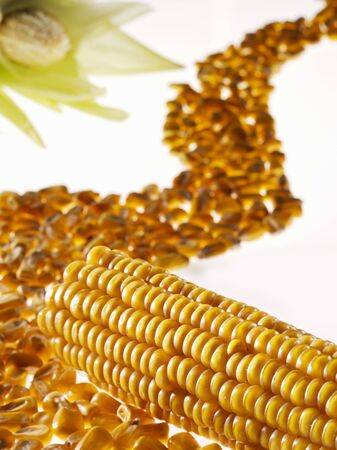 mealie: Corn on the cob and corn kernels forming a road