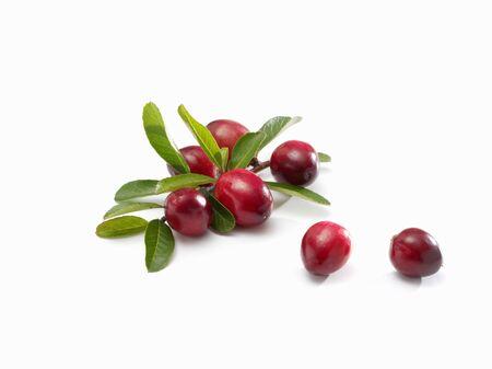 vaccinium macrocarpon: Several cranberries with leaves LANG_EVOIMAGES