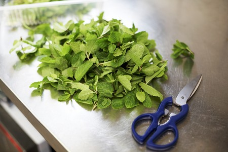 worktops: Fresh mint with scissors on a stainless steel worksurface