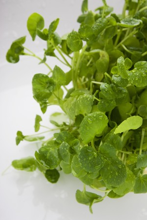 water cress: Fresh watercress with drops of water LANG_EVOIMAGES