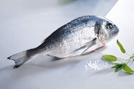 gilthead bream: Fresh gilthead bream, salt and sage LANG_EVOIMAGES