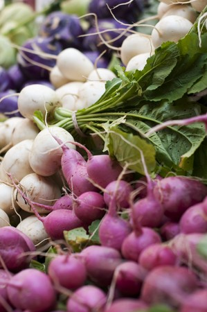 rabi: Radishes and Salad Turnips at the Portland Farmers Market in Monument Square in Portland, Maine