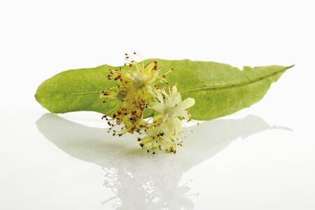 tiliae: Lime blossom LANG_EVOIMAGES
