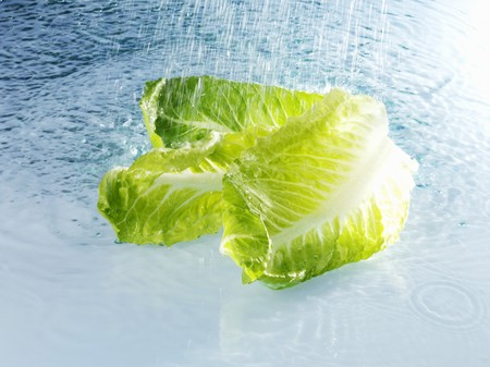 romaine: Romaine lettuce with water LANG_EVOIMAGES