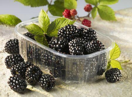 brambleberries: Blackberries in plastic container