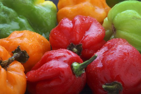 bonnet up: Colourful Scotch Bonnet chilli peppers LANG_EVOIMAGES
