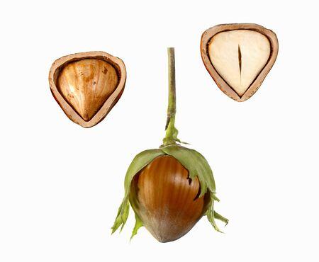 hazel nut: Hazel nut, whole and halved