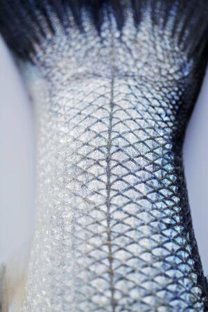 fishtail: A fishtail (close-up)