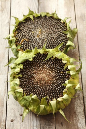 twos: Dried sunflowers on a wooden surface