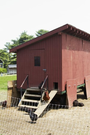farmyards: Chickens in Chicken Coop on a Farm