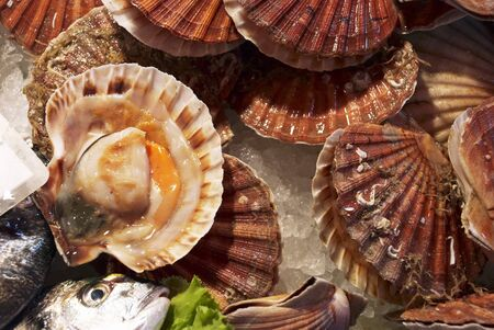 coquille: Scallops on ice