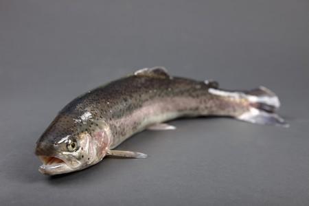 salmo trutta: A rainbow trout
