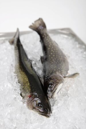 twos: Two fresh char on ice