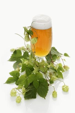 umbel: A glass of beer and a hops umbel