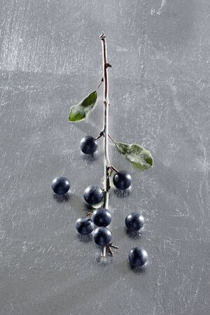 wildberry: Sloe berries